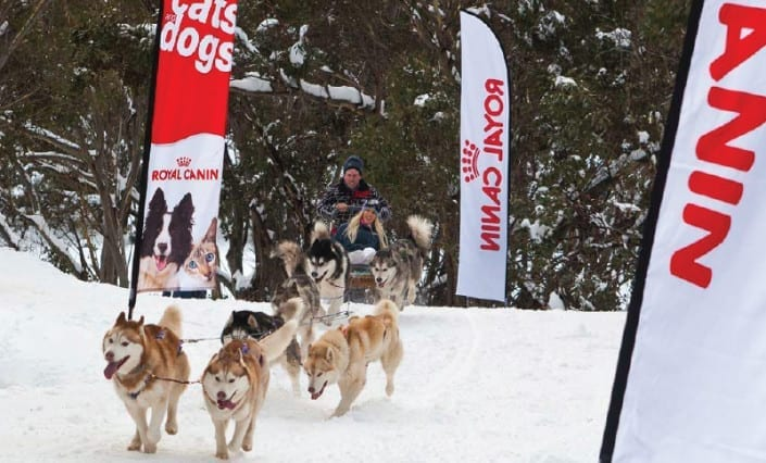 Wing-Banners-Royal-Canin